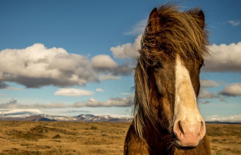 horse-881683_1920