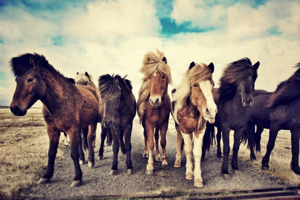 horses-1268256_1920