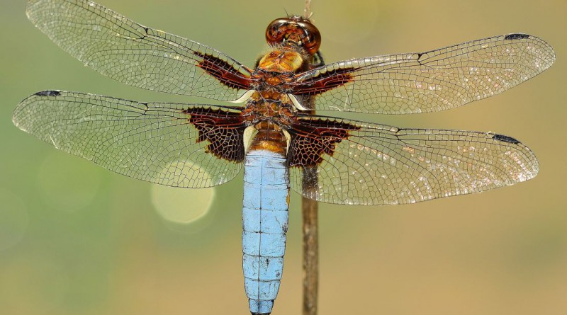 insects-591710_1920