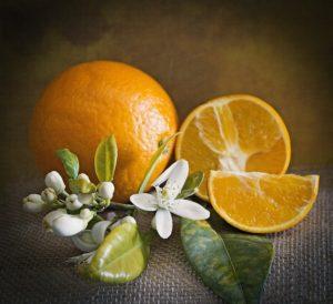 Pomeranč - král citrusů