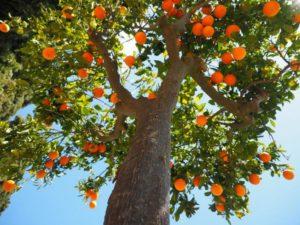 oranges-1117644_1920