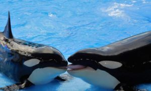 whales-1263066_1920