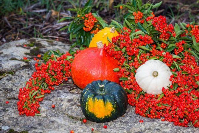 Svátek dušiček - Samhain
