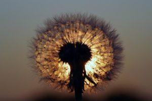 Meditační sluneční lázeň - mistrovské procitnutí