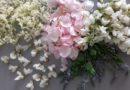 Vůně bylinek, sběr a sušení - akát, rozrazil, růže šípková, popenec