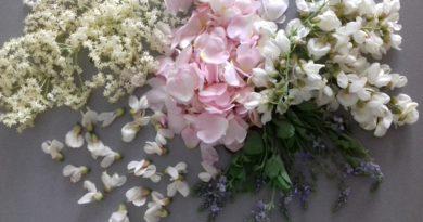 Vůně bylinek, sběr a sušení – akát, rozrazil, růže šípková, popenec