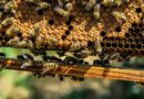 Slunovrat, vznešená tajemství včel a mystika