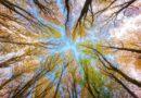 Tajemné smyslové kontinuum všech znamení zvěrokruhu