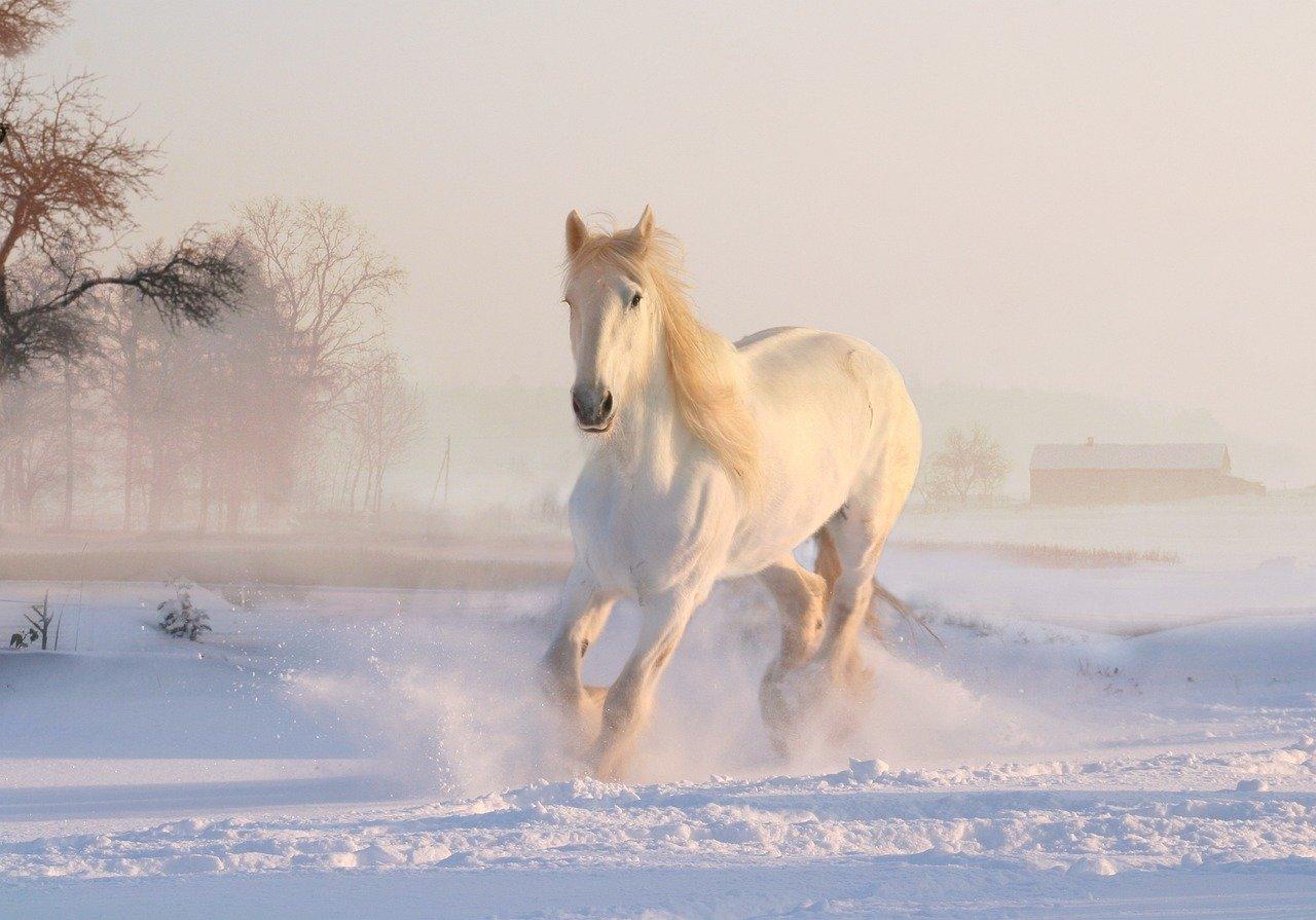 11. listopad – podzimní povídání nejen o sv. Martinovi na bílém koni