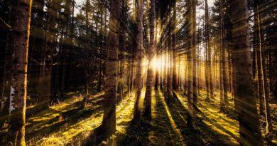 Jarní očista – energetický proces pro nastolení harmonie